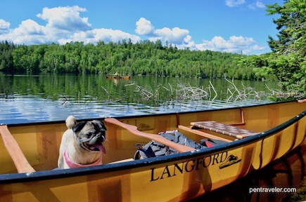 pug in canoe in boundary waters